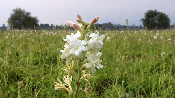 نخستین محموله گل و گیاه از مبدا گمرک دزفول صادر شد