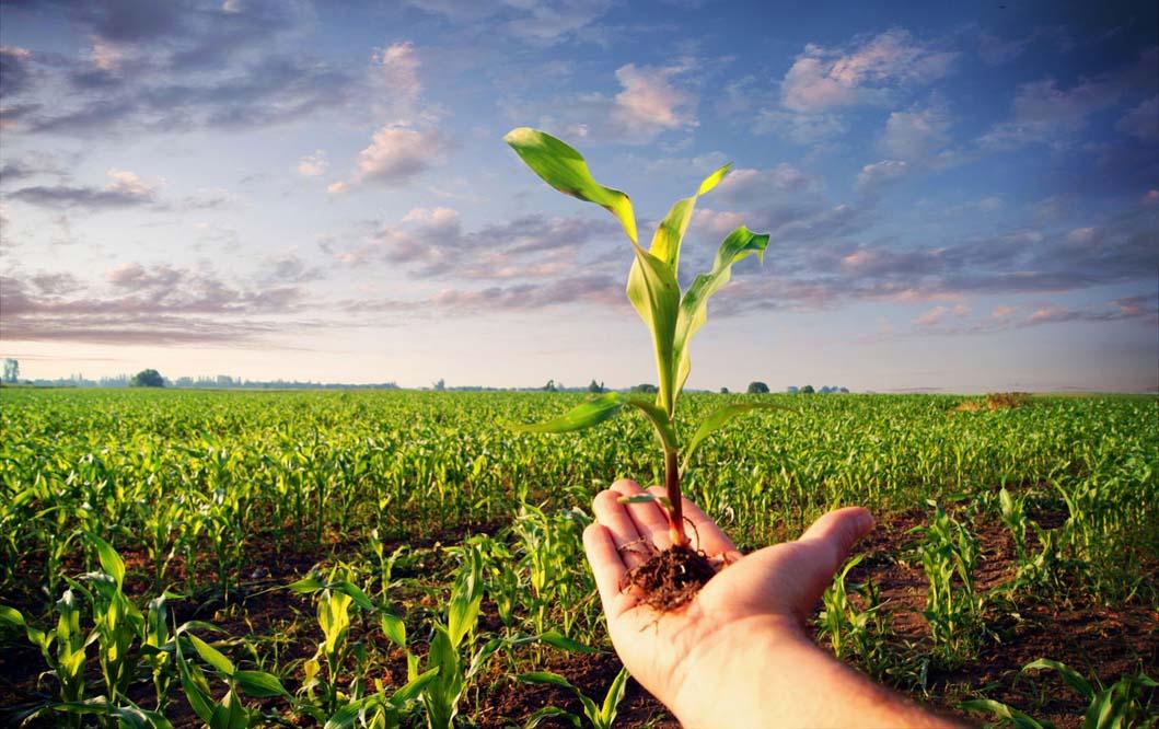 ۲۱۹ فرصت شغلی با افتتاح هفت طرح کشاورزی در دزفول ایجاد شد
